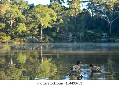 Forest with fog in morning and duck in pond.