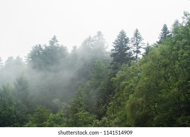 forest fog. Rain in the mountains