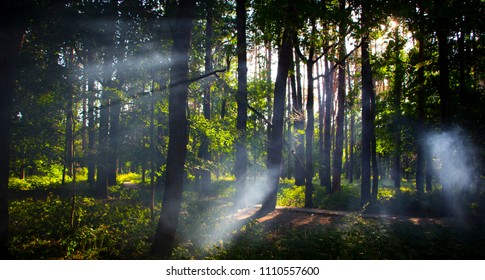 Forest with fog and warm light