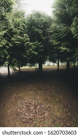Forest with fog in winter, rainy day with terrifying and mysterious appearance
