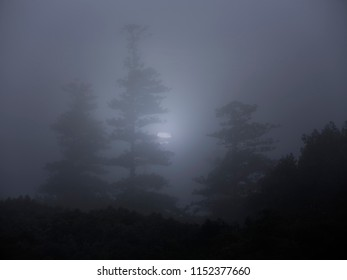 Forest in a foggy full moon night