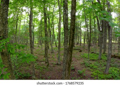 forest foliage environment green landscape wood park