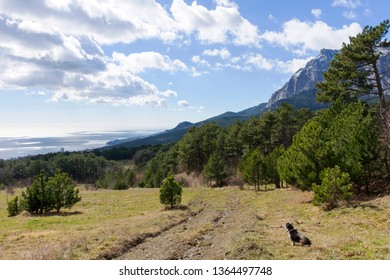 Forest at the foot of Mount Ai-Petri, above the Yalta resort Mishor. Crimea