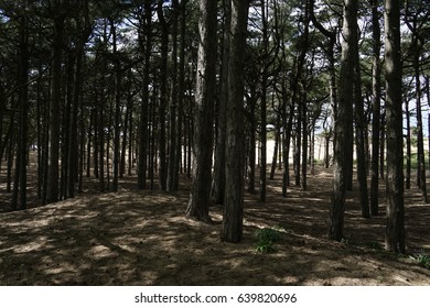 Forest in Formby from England