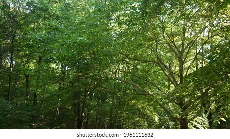 Forest in France, spring 2020