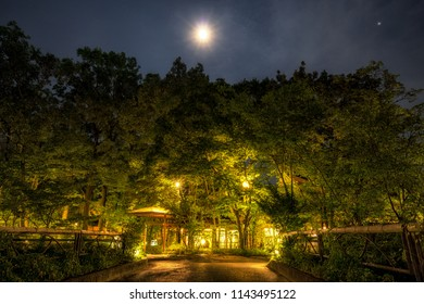 a forest in front of ryokan lit up at night taken with the moon light above. Yufuin, Japan