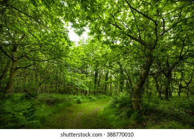 Forest full of life