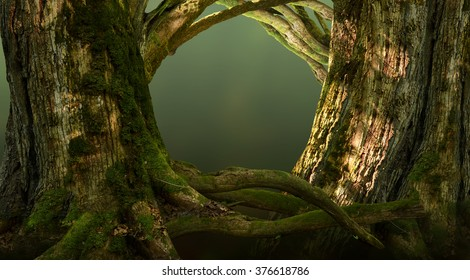 Forest gates. Old massive trees with crooked branches and roots in shine