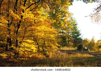 Forest glade in the autumn