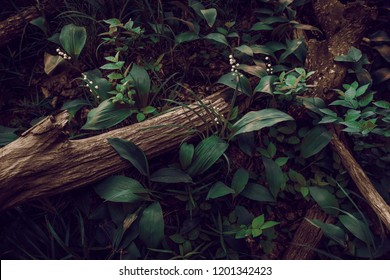 forest glade, a fragment with foliage and tree logs. background.