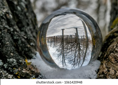 Forest in a glass ball
