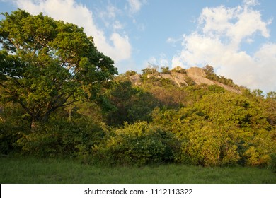 The forest in Great Zimbabwe, the south of Africa, nature, sunny day, trees, bushes, grass. Sunset in historical place, no body.