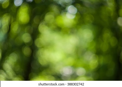 Forest Green background, blur