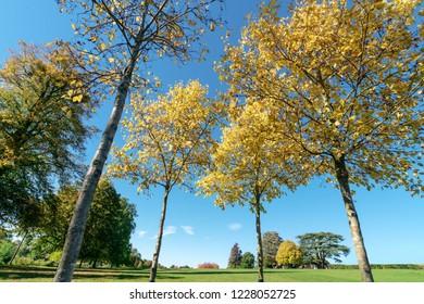 Forest green field