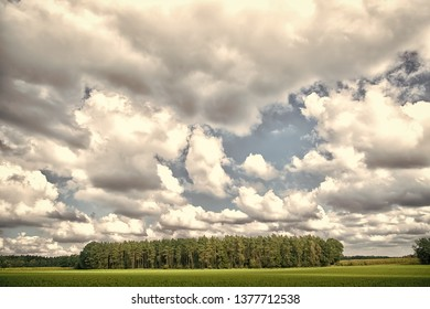 Forest and green field nature landscape on cloudy day. Sky with lot white clouds above forest trees. Nature and freedom concept. Cloudy weather forecast. Weather changes signs. Cloudy sky and nature.