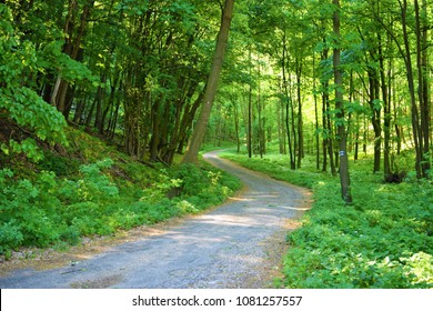 Forest. Green mountain forest landscape.