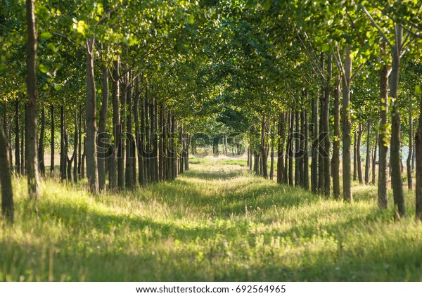 Forest with green trees and alleyway
