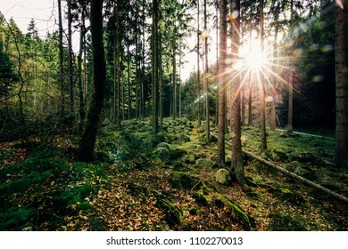 Forest with greenery and sunshine