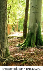 forest in Han sur Lesse