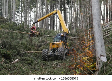 Forest harvester at work - processing spruce forest. Timber harvester. Forestry cutting with a combine harvester. Forestry cutting with special equipment.