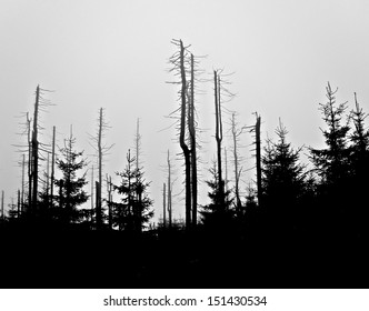 Forest in Harz National Park before sunrise