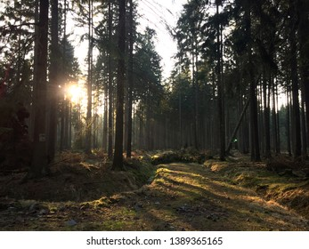 forest heide close to Dresden in the evening in march