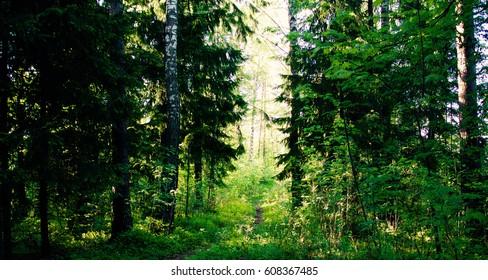 forest in helsinki, finland