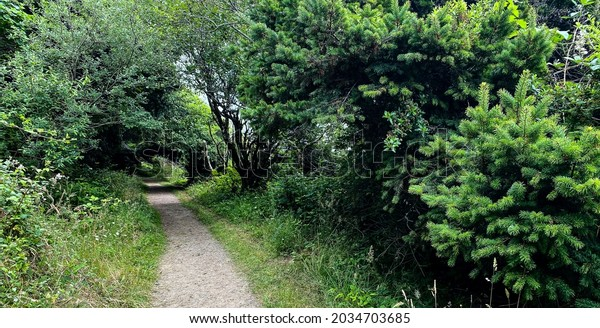 a forest hiking trail through pine trees and lush tunnel foliage path