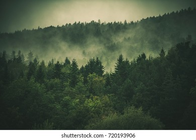 Forest Hills Covered by Fog. Soggy and Foggy Weather Landscape Photo.