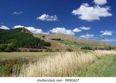 Forest, hills and meadows in New Zealand