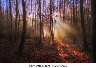 forest Vlčí Hora, Krásná Lípa