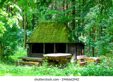 Forest hut in summer woods. Forest hut. Forest cabin in woods
