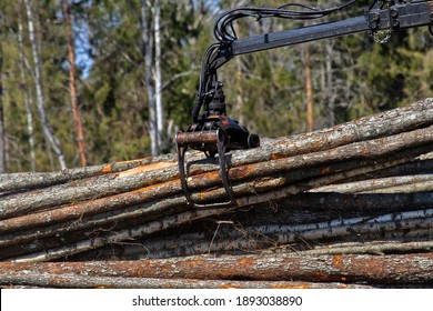 Forest industry. Operations for loading-unloading logging truck at felling (cutover area) and logging site (wood storage place). Wheel-mounted loader, round-timber grab. Series of images