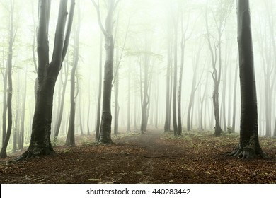 Forest into the fog