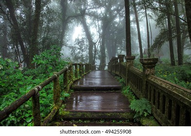 Forest into the fog walkway