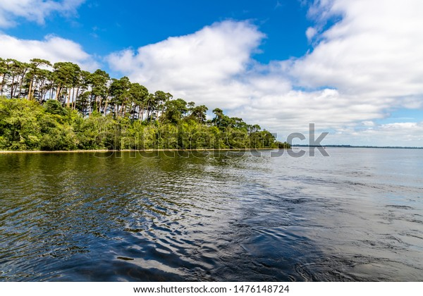 Forest in Island of Lough Corrib, Oughterard, Ireland