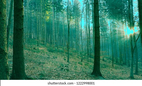 Forest In Italy