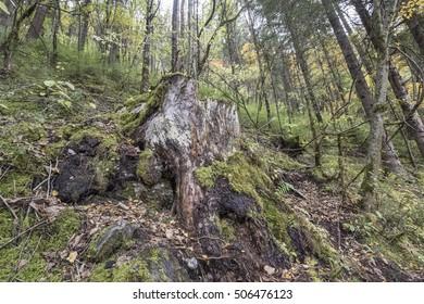 Forest in Jiuzaigou, Sichuan of China
