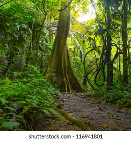 Forest. Jungle background. Tropical rain forest with green trees, bushes and foliage. Outdoor hike road in Thailand