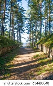 Forest in Jurmala, Latvia