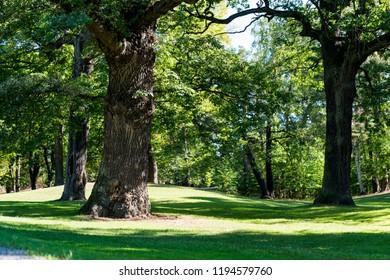Forest of the Kungliga Djurgården Park in Stockholm in summer.