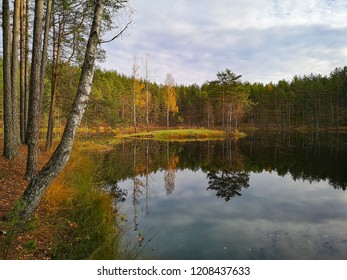 forest and lake