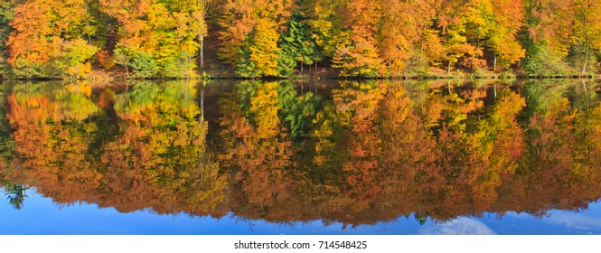 Forest lake and colorful autumn forest.Beautiful sunlight in the autumn forest.