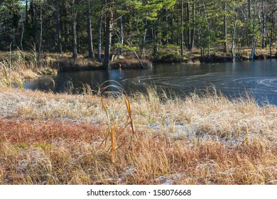 Forest lake with ice in autumn