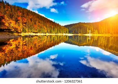The forest lake reflection landscape. Forest lake trees in autumn season panorama