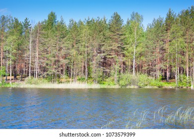 Forest lake in Russia, summer