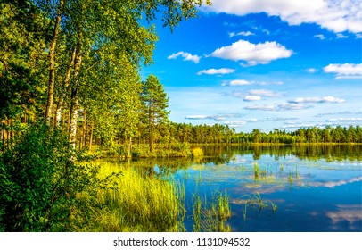 Forest lake shore landscape in sunny day. Summer forest lake shore panorama. Forest lake shore view
