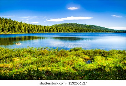 Forest lake summer landscape. Summer forest lake panorama. Forest lake shore view