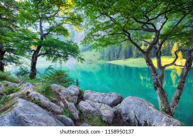 Forest and lake in the Switzerland mountain valley. Tree and water. Natural landscape in the Swotzerland at the summer time.