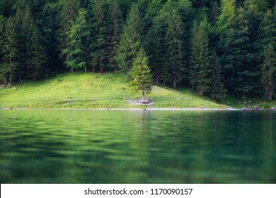 Forest and lake in the Switzerland. Forest and reflection on water surface. Beautiful landscape at the summer time